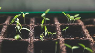 Smart Urban Gardening
